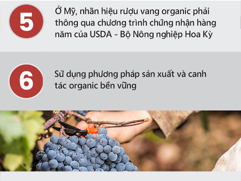 ruou-vang-organic-3