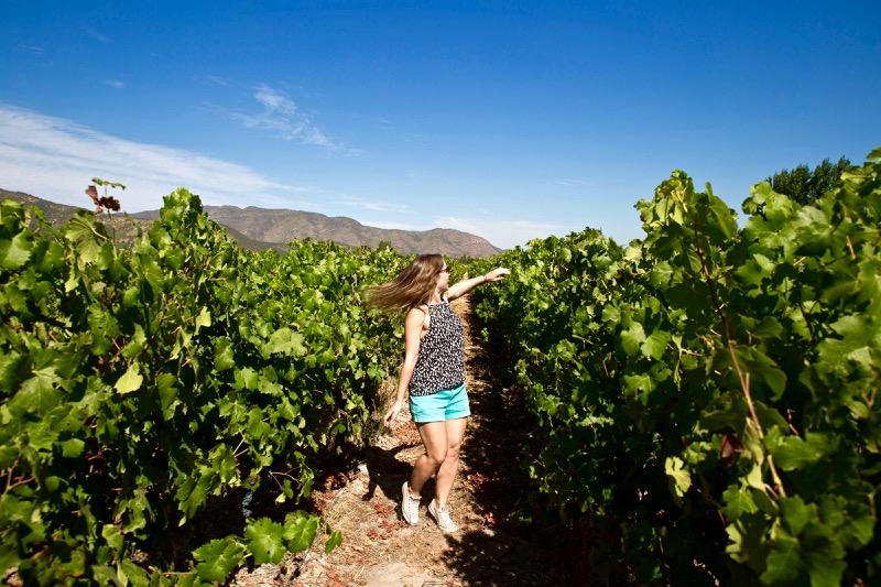 Vina-Montes-Colchagua-Valley-Chile-16